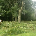 Garden Care and Tree Cutting Hampshire - All Round Home Improvements