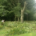 Tree Cutting - All Round Home Improvements Garden Care